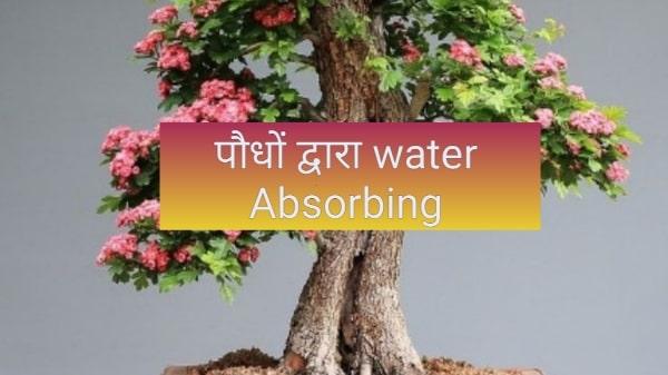 पौधों द्वारा जल अवशोषण एवं संवहन की क्रिया