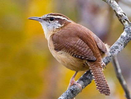 Un ave llamado Woodstock