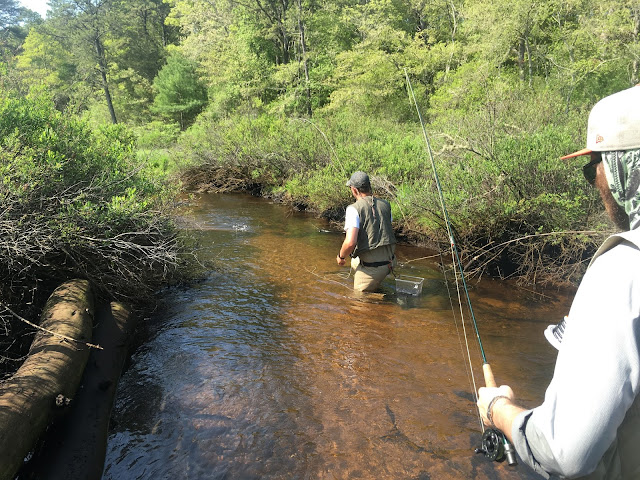 Red Brook Wareham MA Trout