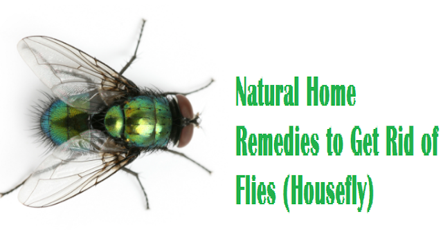 Natural Home Remedies to Get Rid of Flies (Housefly)