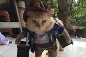 Bisnis Pakaian Kucing: Iseng-iseng Menguntungkan