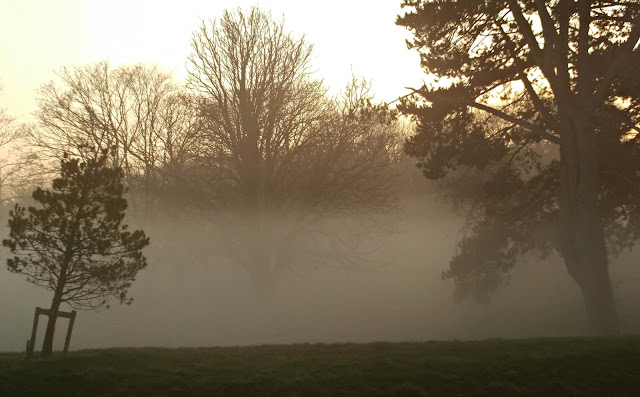 Thick ground fog around trees