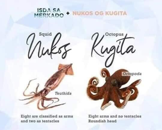Nukog (Squid) / Kugita or Pugita (Octopus)
