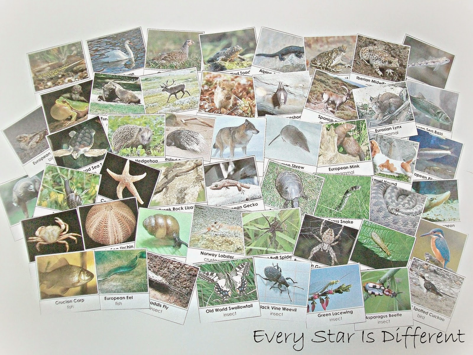 50+ European Animal Cards (Free Printable)