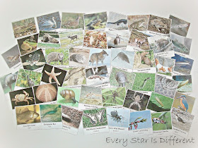 50+ European Animal Cards (Free Printable)