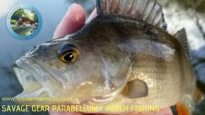 Perch fishing
