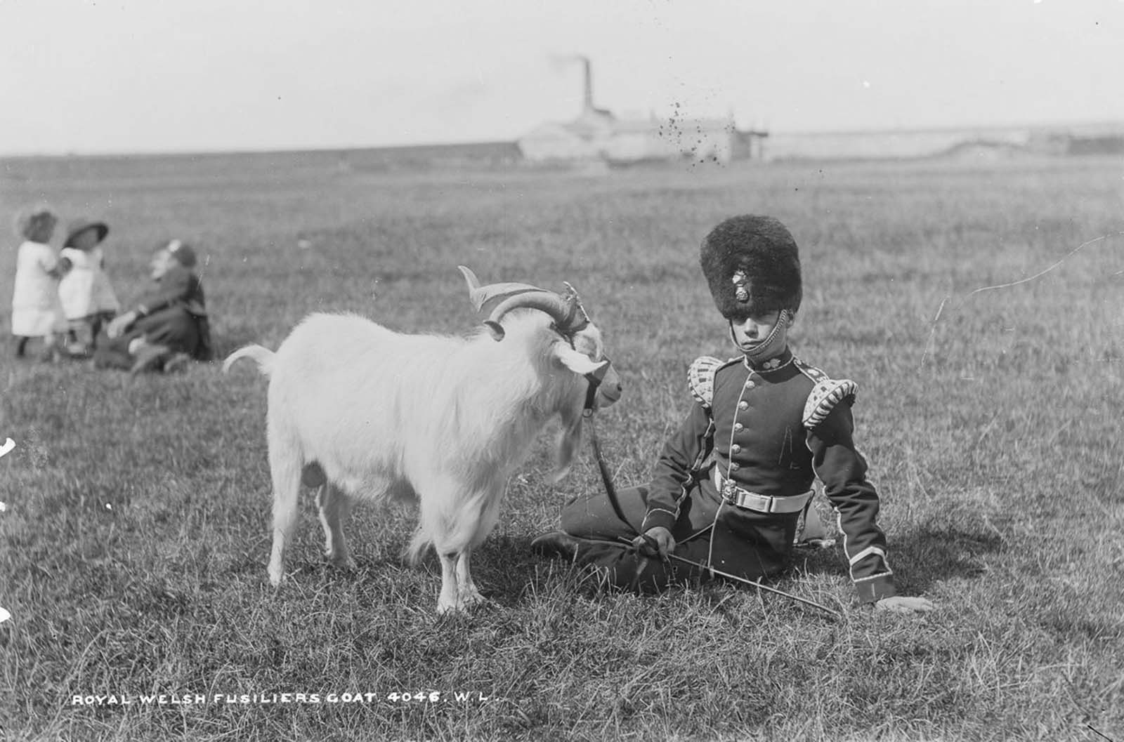 A Royal Welsh Fusilier with the Regimental Goat, and his strap-on crest. 1887.