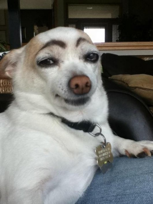2 Cute Animal Pics Very Silly Looking Dog