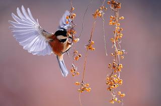 فقدت الولايات المتحدة وكندا أكثر من 1 من كل 4 طيور في السنوات الخمسين الماضية
