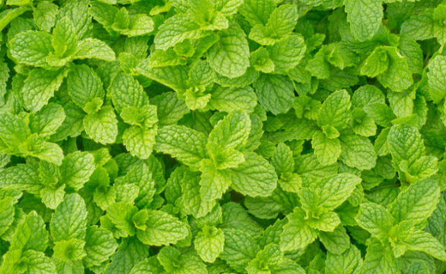 Help Your Brain and Memory by Growing These Magic Plants in Your Garden 55