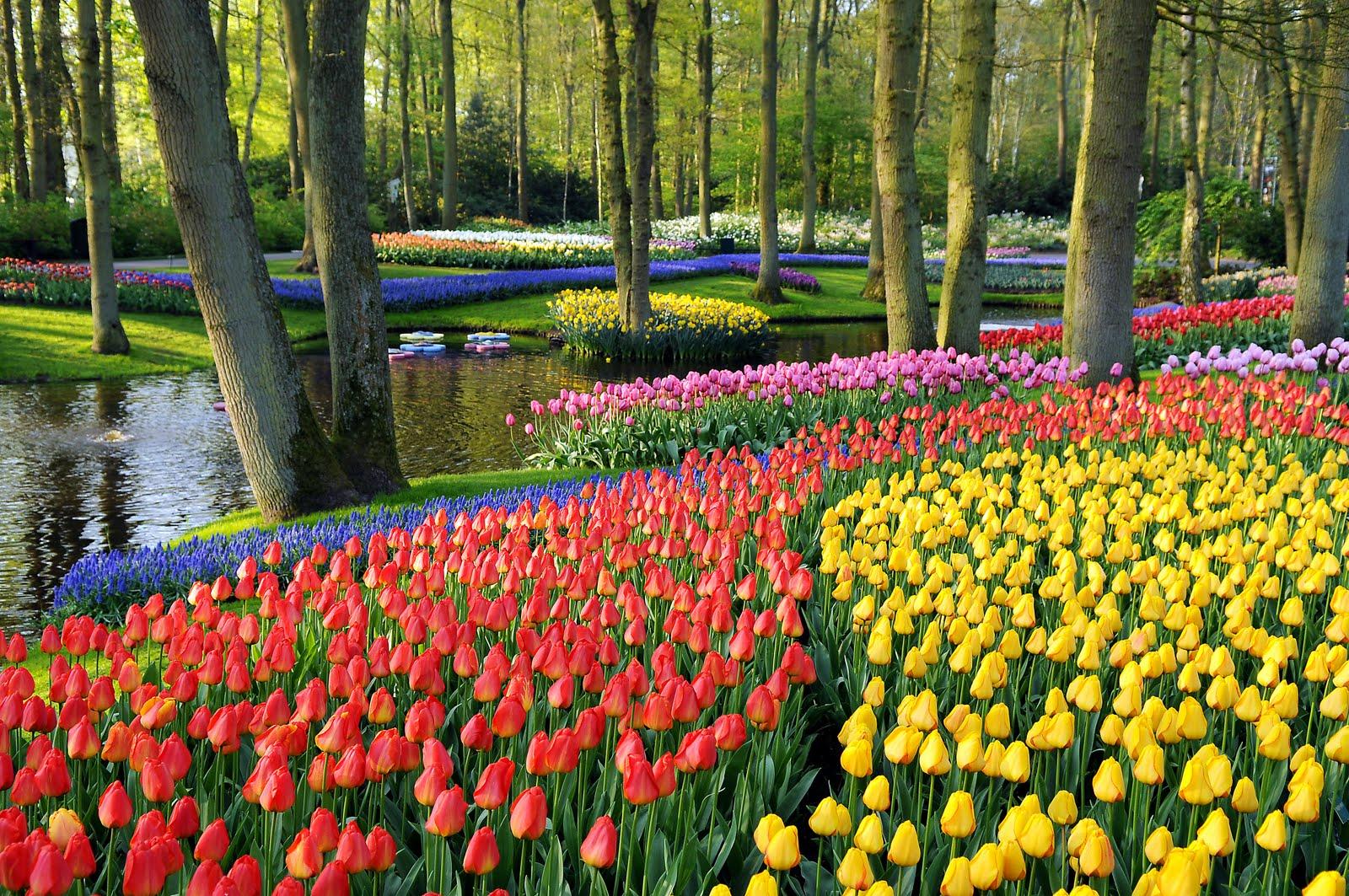 Красивый вид парка Кекенхоф