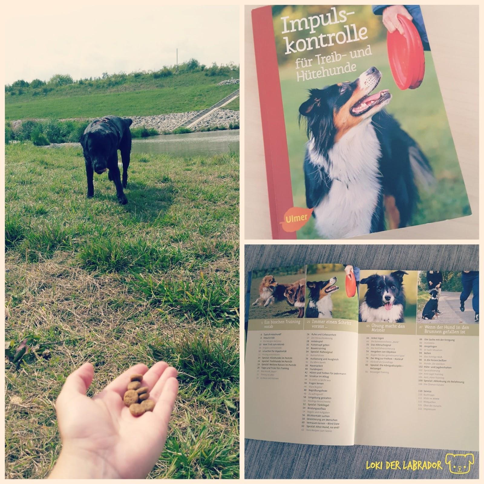 Fotocollage Impulskontrolle Buch Futter