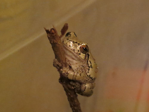 tree frog on small branch