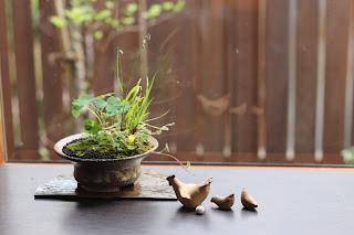 山野草盆栽とニワトリとひよこの人形