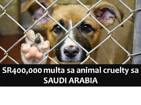 The warning has been raised in Saudi Arabia regarding torturing of animals.  This is after videos of people abusing animals spread in social media like WhatsApp, SnapChat, and Twitter.  Ahmed Al-Bouq, director general of Prince Saud Al-Faisal Center for Wildlife Research in Taif, has warned the public that torturing animals could lead to a fine up to SR400,000. Al-Bouq said such incidents are rare and uncharacteristic and committed by individuals who lack religious and moral values.