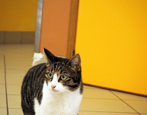 cat with yellow background