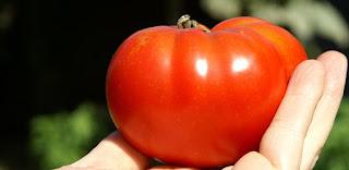 10 Manfaat Menakjubkan Buah Tomat Bagi Kesehatan