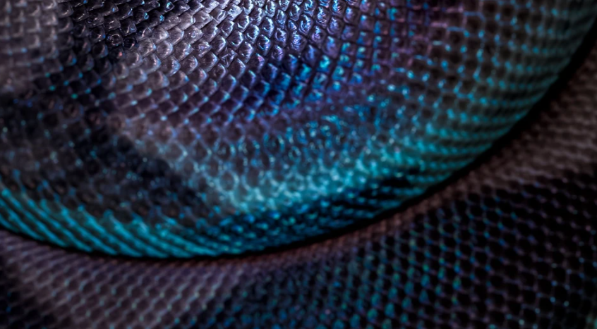 What's inside: snake venom in cosmetics (and why we all need it)