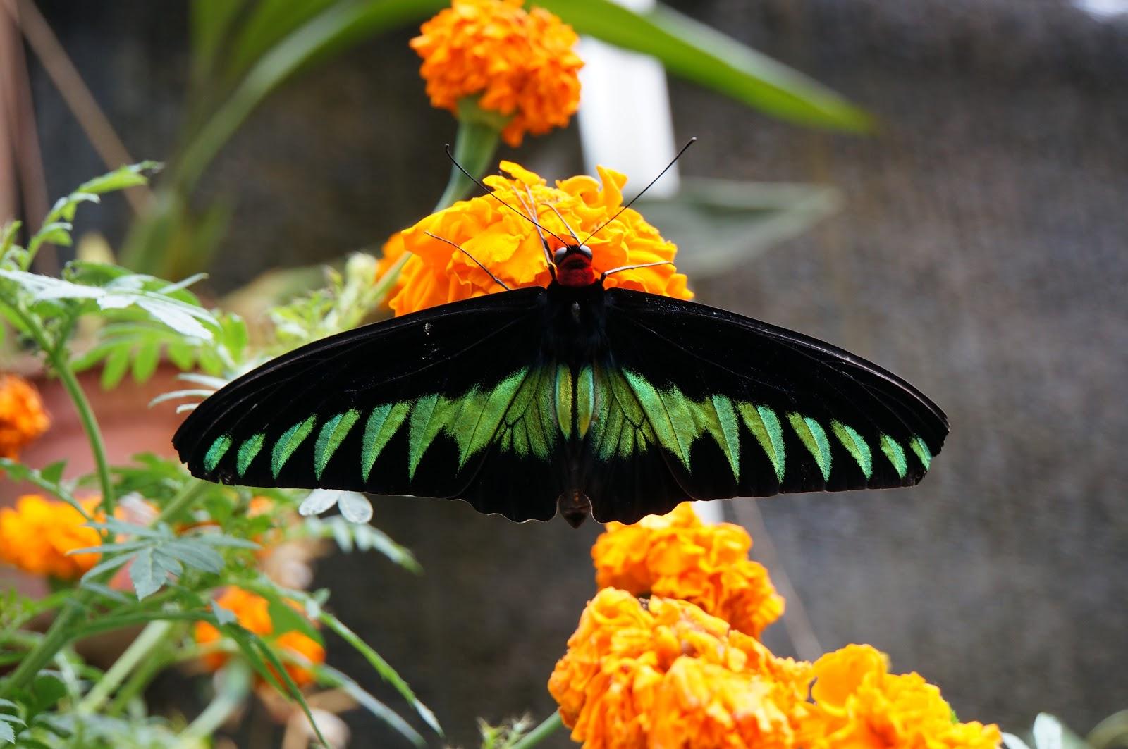 Restaurant Les Papillons Tours