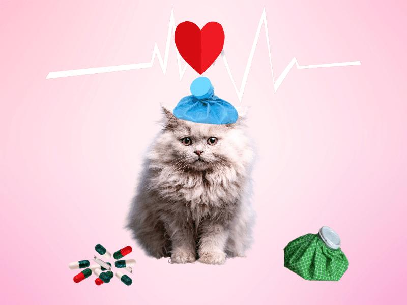 Cuidados de salud para el gato Angora