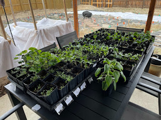 Seedlings Outside