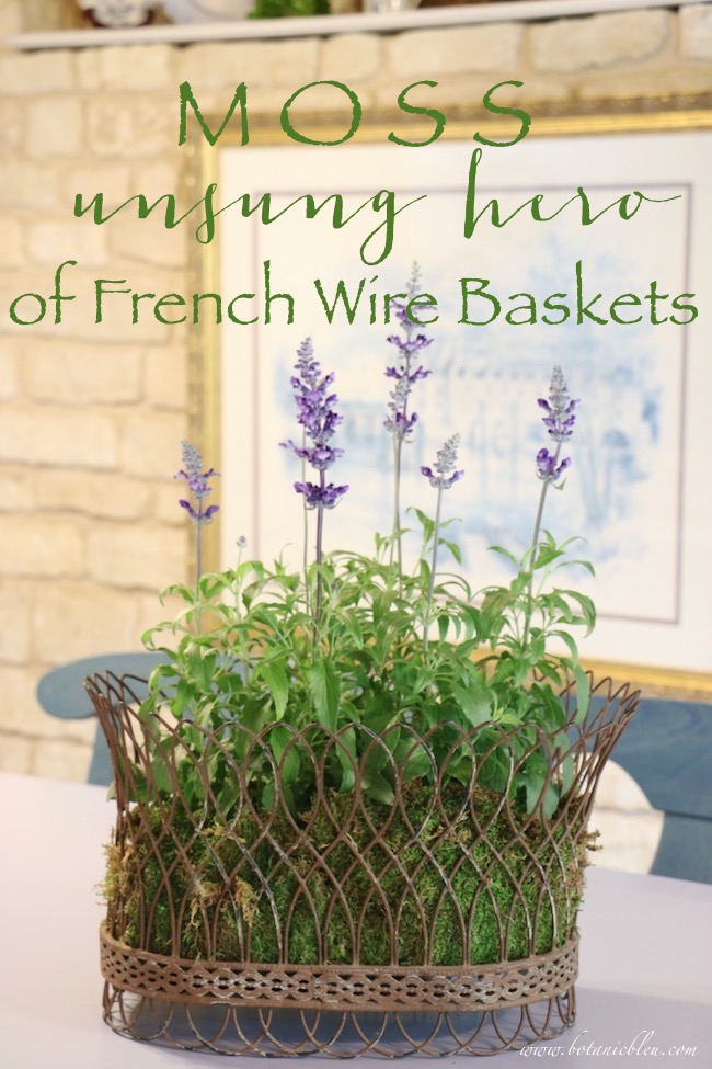 French Wire Basket With Blue Sage and Moss on Kitchen Countertop