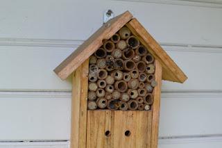 abeilles solitaires