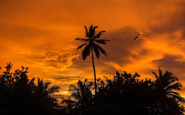 15 Nature Palm Trees, Sunset, Tropics, Sky, Clouds Wallpapers HD 4K for Desktop