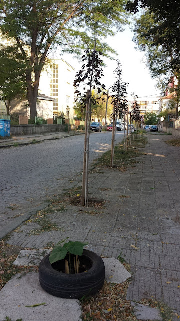 Official, Unofficial, Trees, Planted, Yambol,
