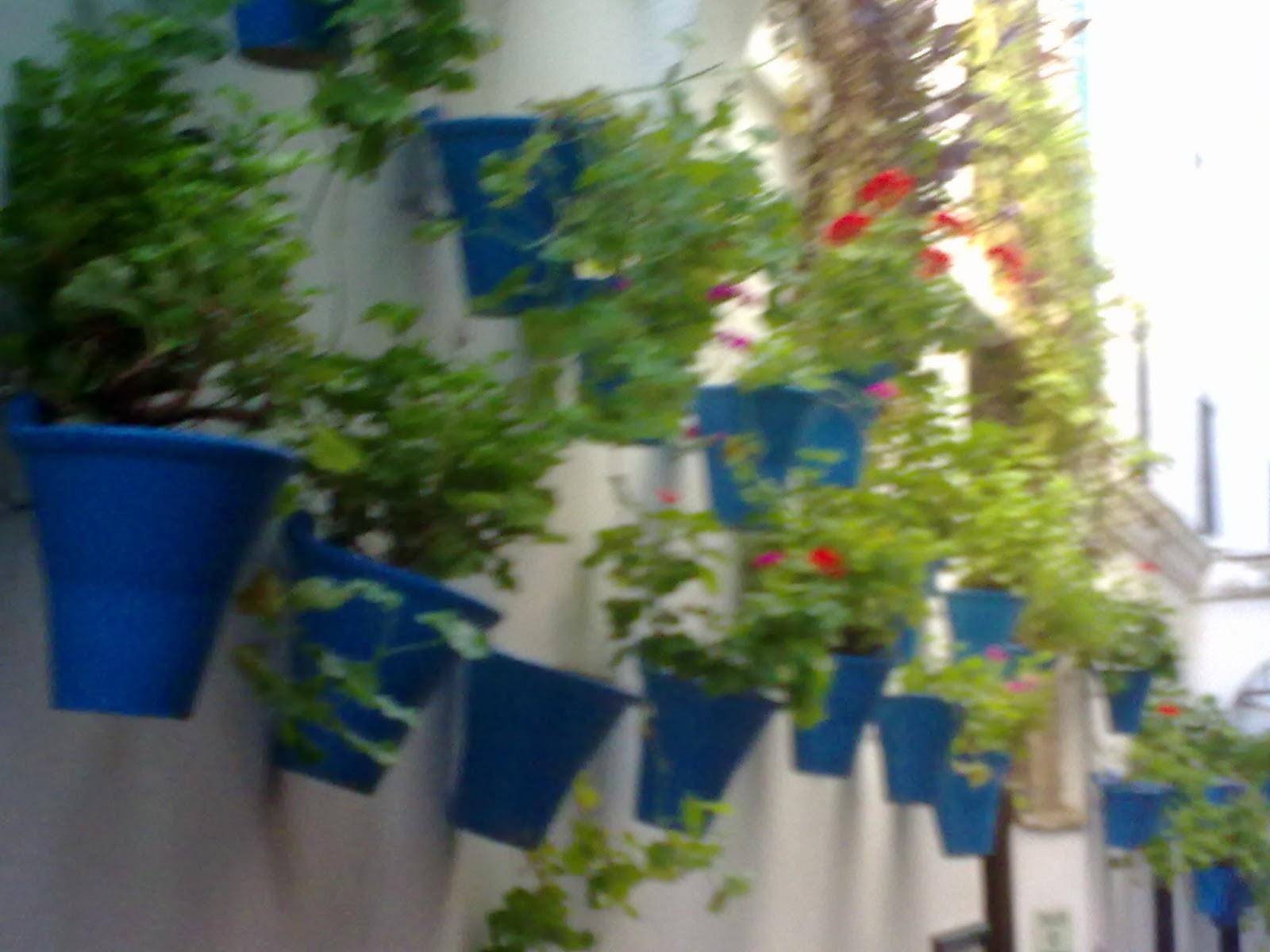 Entre patios y plantas gitanillas y patios for Decoracion de patios con macetas