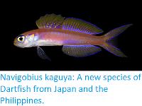 https://sciencythoughts.blogspot.com/2017/11/navigobius-kaguya-new-species-of.html