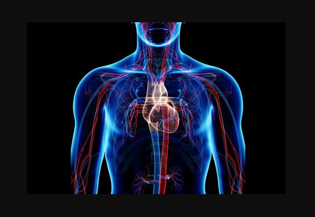 Mengenal peredaran darah besar dan peredaran kecil