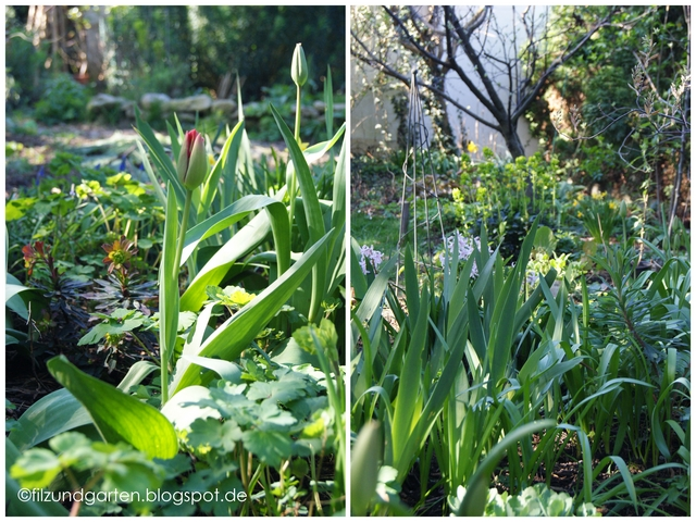 Tulpen und Frühlingsblüher im Terrassenbeet
