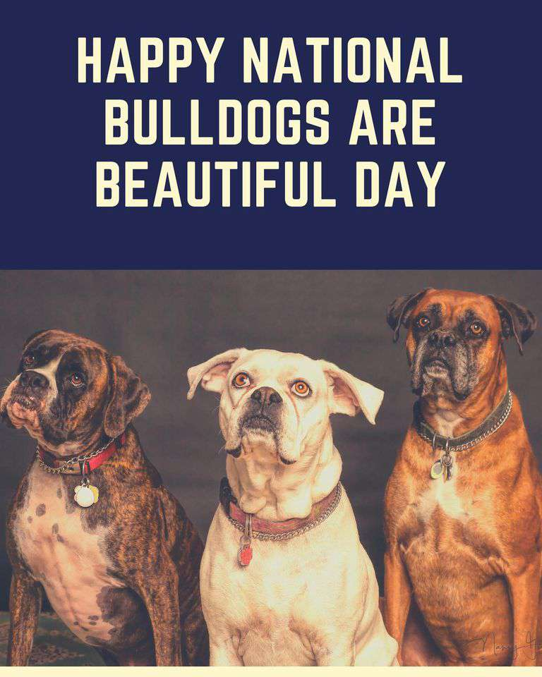 National Bulldogs Are Beautiful Day Wishes Awesome Images, Pictures, Photos, Wallpapers