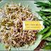 5 Tanaman Kebutuhan Dapur Ini Sangat Mudah Ditanam