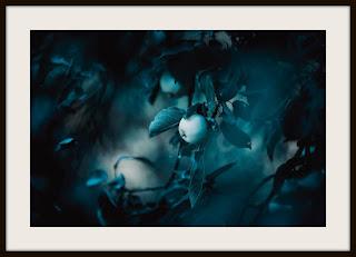 plakat jabłko, plakat jabłoń, plakat darkmood, plakat przyrodniczy, plakat A3, plakat pionowy A3
