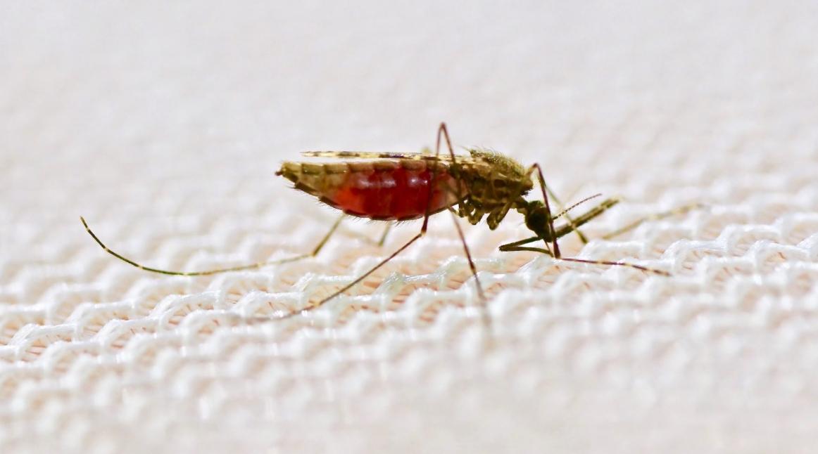 Cambiano strategia contro la Malaria: ora curano le Zanzare.
