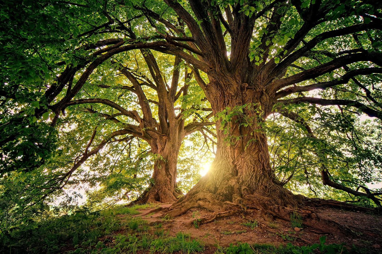 człowiek przebudzony, ludzie są jak drzewa, doświadczanie życia, inny wymiar