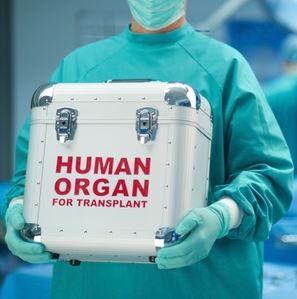 Ja cilat janë organet që transplantohen më shpesh!