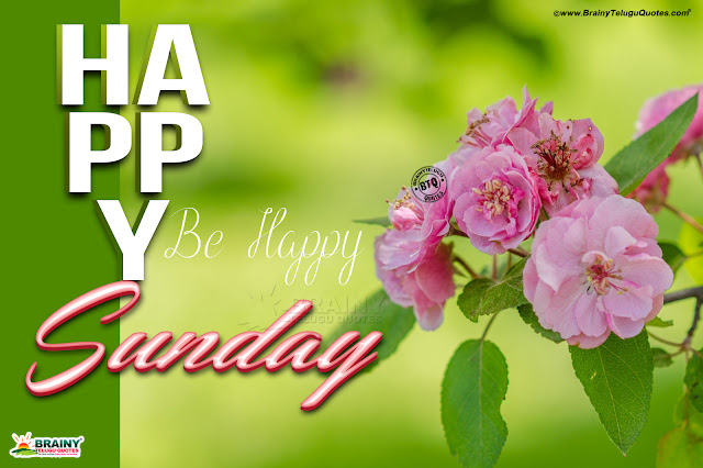 happy sunday greetings in english, flowers hd wallpapers with happy sunday messages, happy sunday for brother in english