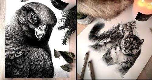 00-Animal-Nature-Drawings-Alyse-Dietel-www-designstack-co