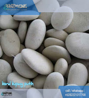 batu sikat putih kupang
