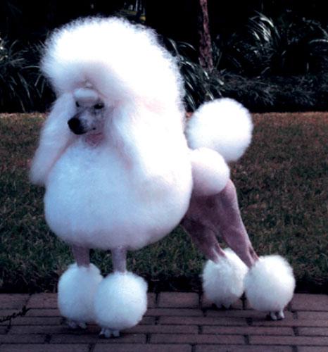 Surprising Dog Haircut Day Hair Styles Hairstyles For Women Draintrainus