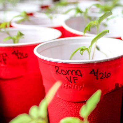 Planting Roma VF Seedlings | On The Creek Blog