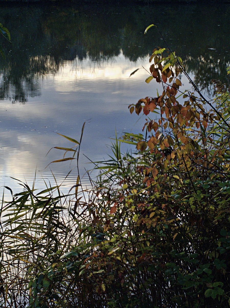 #297 Pentax 03 Toy Lens Telephoto f5.6 3.2mm – Herbstimpressionen am Aileswasensee (3)