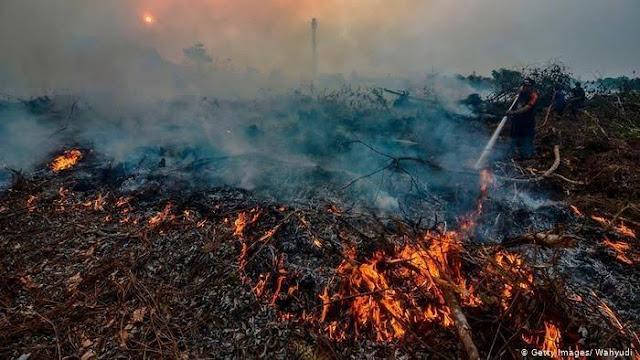 Bencana alam kebakaran hutan