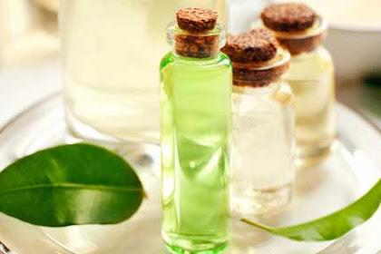 16 Manfaat minyak pohon teh untuk kesehatan dan kecantikan