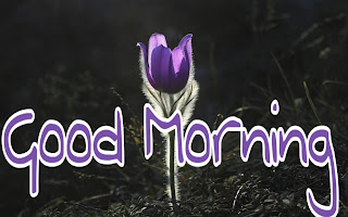 good morning hd wishes