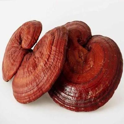 Reishi Mushrooms Benefits