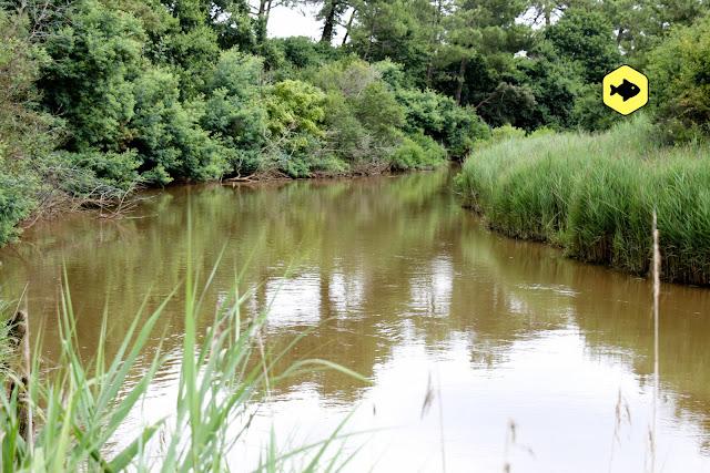 Angelurlaub Tipps Flusskarpfen
